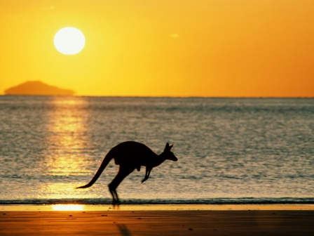 med_World_Australia_The_kangaroo_-_Australia_007479_.jpg